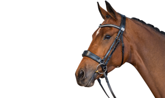Fairfax Performance Bridle
